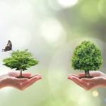 Succession et assurance vie
